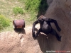 gorillawithbarrel03