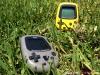 pair-grass